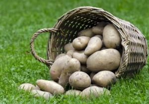 krompir-9