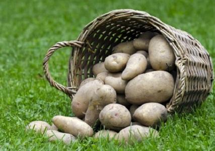krompir-9s