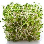 Klice u zdravoj ishrani: detelina lucerka